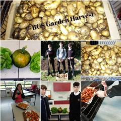 BCS Garden Harvest